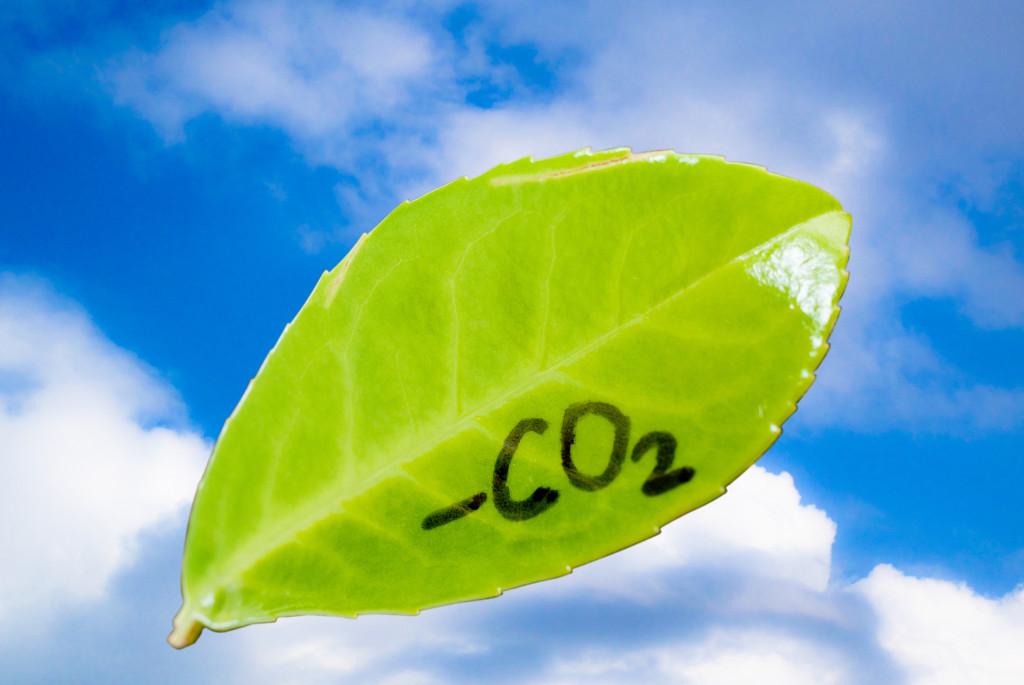 risorsa ambientale
